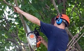 Tree Trimming Being Performed in San Antonio